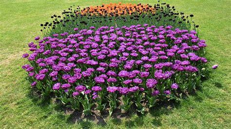 tulipanomania al parco giardino sigurt 224 fino al 30 aprile