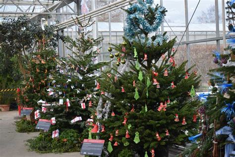 christmas tree decorating competition rhs caign for
