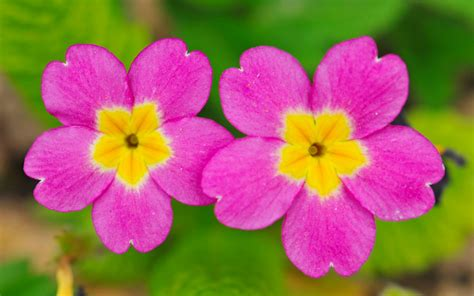 two small cute flowers 1280x800 wallpaper