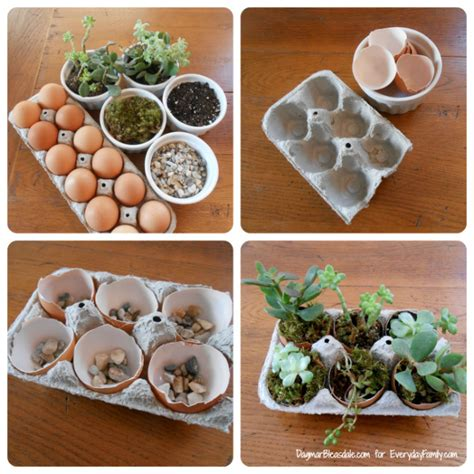 diy succulents diy succulent garden in egg carton