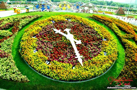dubai miracle garden the worlds biggest natural flower