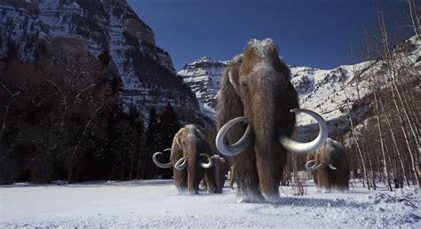 Woolly Mammoth, Anyone?