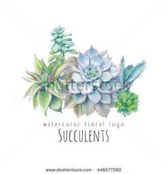 succulent stock images royalty free images amp vectors