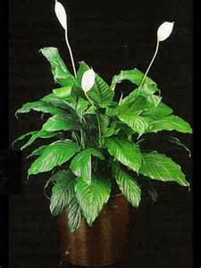 best indoor low light plants indoor plants gallery the potted plant scottsdale