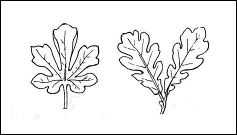 Simple Leaf Template by Leaf Template Printable Leaf Templates Free Premium