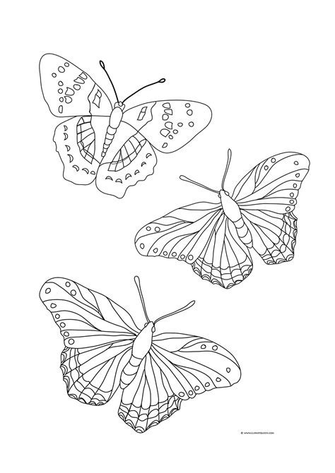 Butterfly Coloring Pages Color Draw L