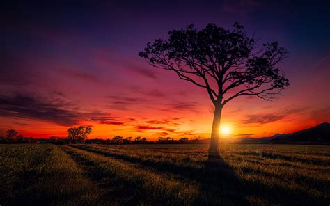 Nature De Sol by Sunset Scenery Wallpapers Hd Wallpapers Id 20047