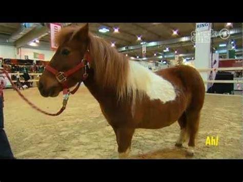 wann ist ein pferd alt pferd videolike