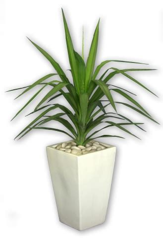indoor plant pot products funky bunches