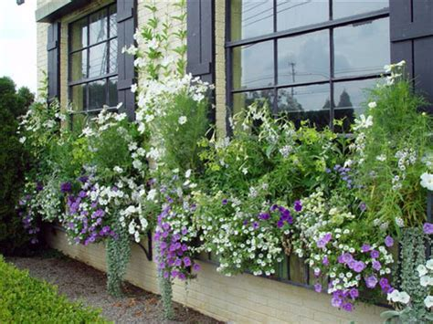 window box planting ideas has finally sprung get a jump on your summer