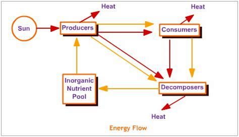 flow of energy diagram energy flow our environment science help science