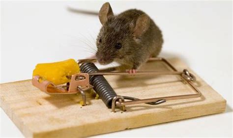 mouse benching mouse trap inspirational story the mouse trap sam o salau