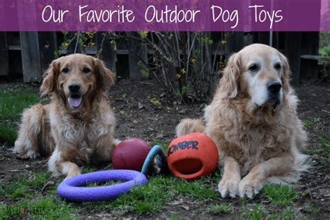 in the sun the 6 best outdoor toys of 2017