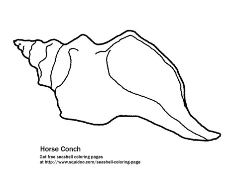 queen conch coloring page conch coloring download conch coloring