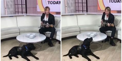 today show puppy the adorable today show puppy loved being serenaded keith