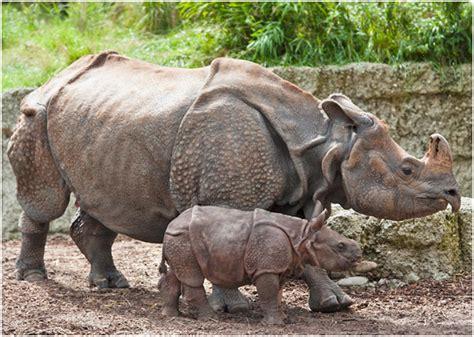 Zoologischer Garten Basel Ag zoologischer garten basel ag ein tierisches vergn 252