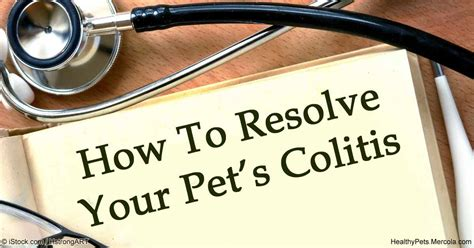 symptoms of colitis in dogs colitis in pets causes symptoms and treatments