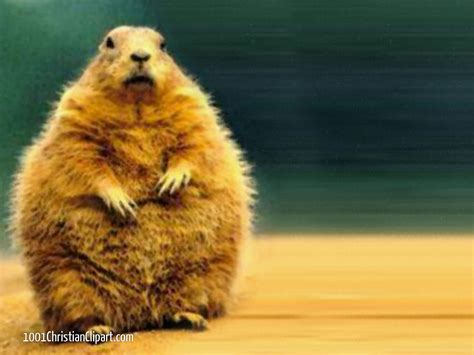 groundhog day religious meaning groundhog day 1001 christian clipart
