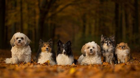 where did dogs originate where did your come from new tree of breeds may hold
