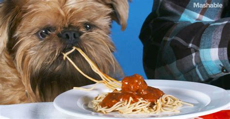 can dogs eat spaghetti dogs and their humans the same plate is cuter than it sounds