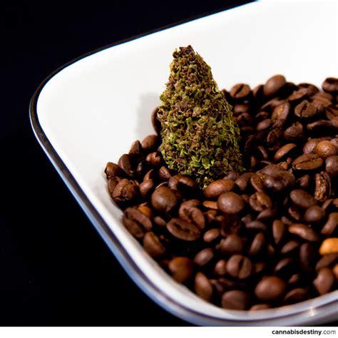 coffee and cannabis books chocolate gumballs coffee and cannabis destiny