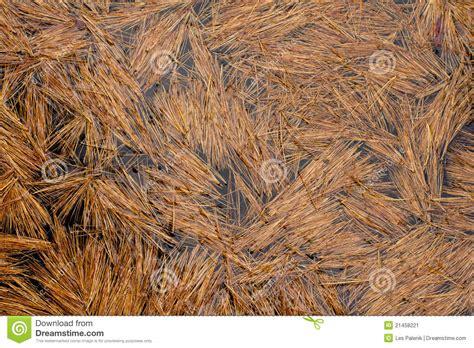 pine pattern stock pattern background pine needles on water stock image