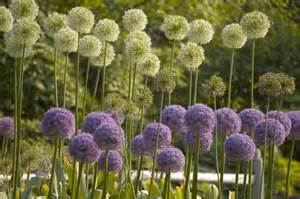 Picture Of Flowers Garden File Flowers At Botanical Garden Jpg