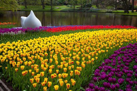 tulip flower garden keukenhof park free stock photo domain pictures