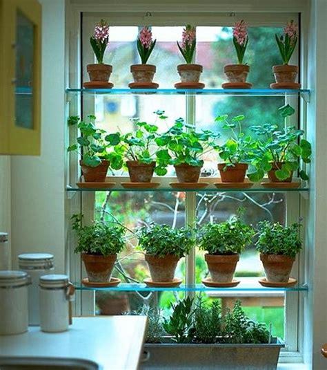 mini herb garden indoor herb garden pinterest curtain call home garden pinterest plants