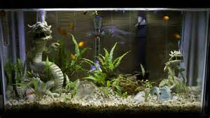 aquarium decoration ideas freshwater 20 gallon fish tank decoration ideas 2017 fish tank