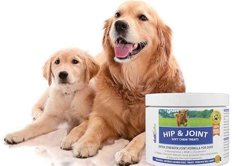 best joint supplement for dogs best joint supplement for dogs