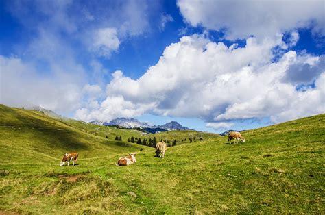 photo gratuite paysage vert herbe chs image