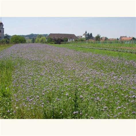 Hängematte Kaufen Schweiz by Samen Saatgut Gr 252 Nd 252 Ngung Phacelia