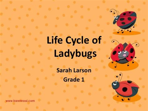 ppt the life cycle of ladybugs powerpoint presentation life cycle of ladybugs