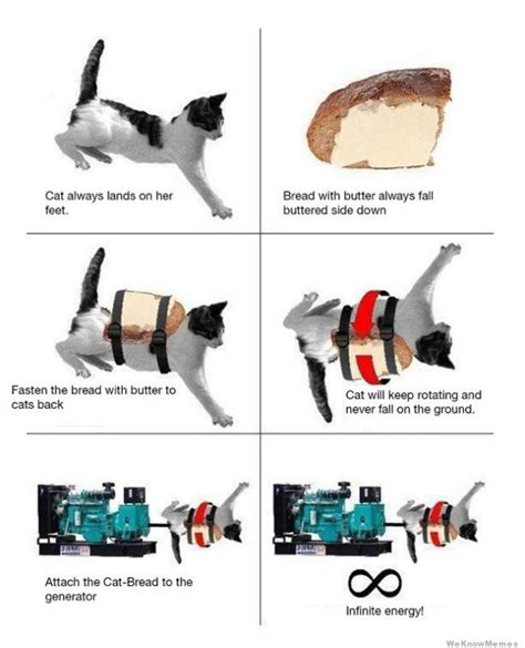 Cat Toast Meme - using a cat to get infinite energy weknowmemes