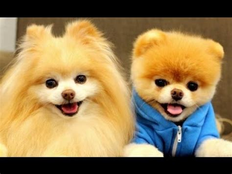 prettiest dogs 10 most beautiful breeds in the world