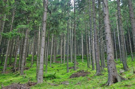 a forest this is a forest real science