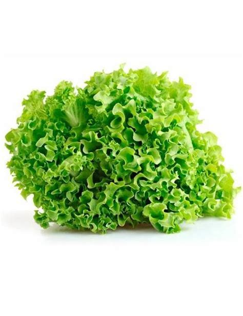 Hydro Seed Lettuce Grand Rapid rapids lettuce seeds greenmylife anyone can garden