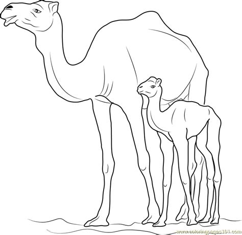 camel  kid coloring page  camel coloring pages