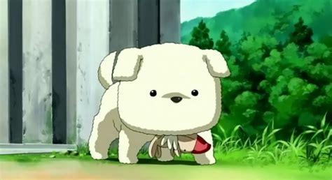 tv potato otaku random pics w anime animals