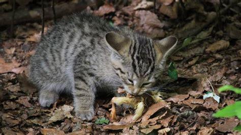 wann wird katze ruhiger warrior cats heiler ausbildung