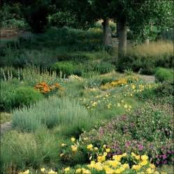 Garden Of Glendora Water Conservation Plant List And Ideas From The City Of