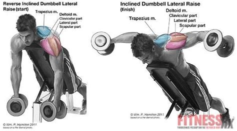 bent over lateral raises on incline bench 1000 ideas about lateral raises on pinterest biceps