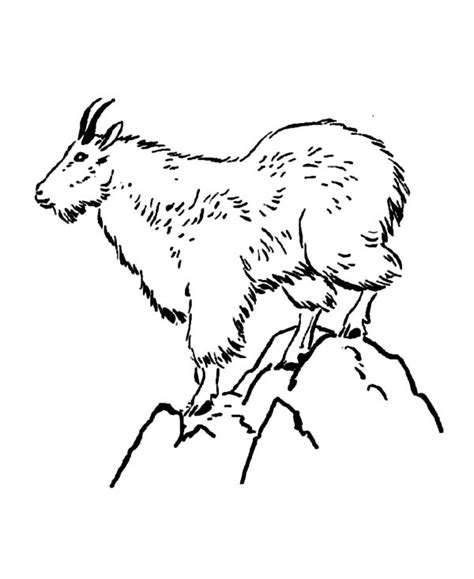 coloring pages mountain goat drawing goat coloring pages color luna