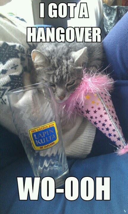 Hangover Meme - hangover cat meme catmeme memes funny pinterest