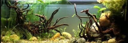 Fauna Aquascape 7 Aquascaping Styles For Aquariums The Aquarium Guide