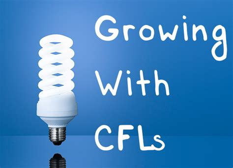cfl light bulbs for growing cfl grow lights a beginner s guide to growing with cfls