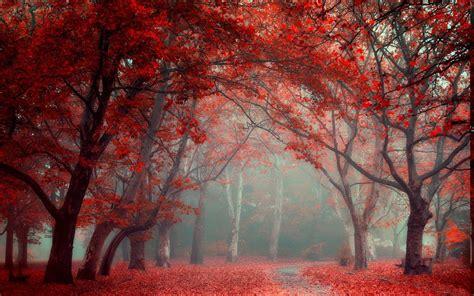 landscape nature park leaves road fall trees mist