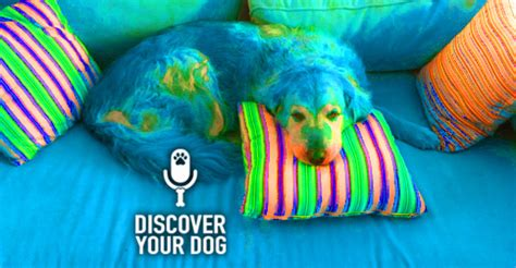 how to train your dog to stay off the couch how to teach your dog to stay off the couch train your