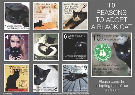 how to find a black cat in a room the psychology of intuition influence decision and trust books black cats 171 animal rescue and care